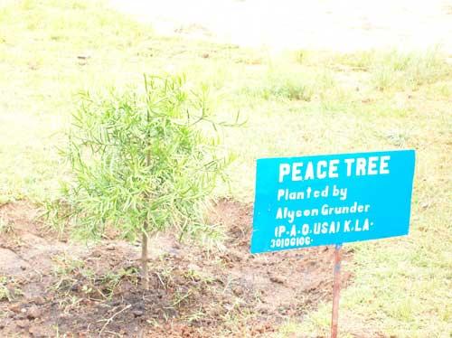 peacetree
